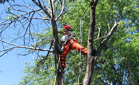 Brunswick, Maine Tree Work